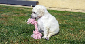 puppies_img4