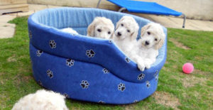 puppies_img8